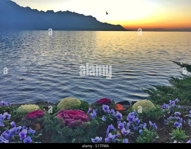 Flowers, lake, mountain and sunset - Stock Image