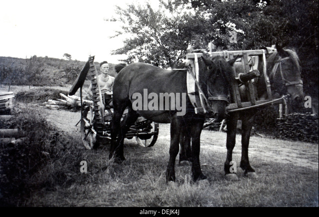 Young Mr Gessler, at his arrival from Switzerland before starting the Domaine de Joÿ wine and armagnac estate, - Stock Image
