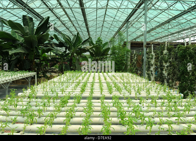 final business plan on cultivation of Get inspired with our free cannabis business plan sample our most popular  business plan samples include: cultivation, dispensary, extraction,.