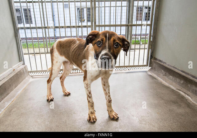Abandoned dog in rescue center - Stock Image