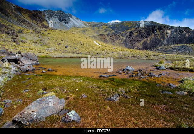 Kepler Track Fiordland National Park South Island