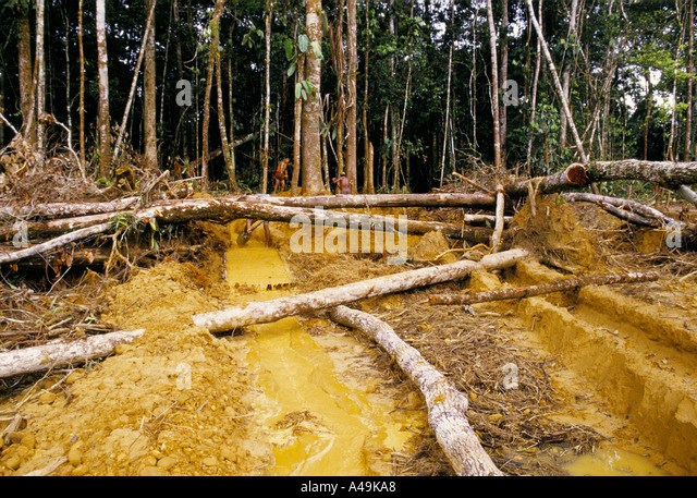 deforestation due to gold mining peru - Stock Image