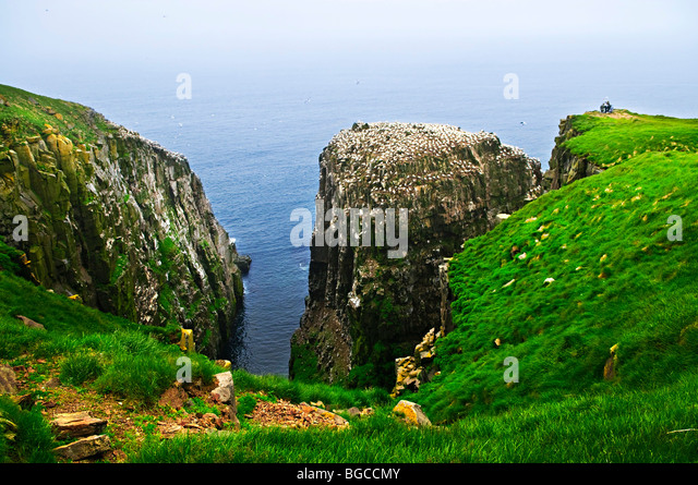 Tourists at cliffs of Cape St. Mary's Ecological Bird Sanctuary in Newfoundland - Stock Image