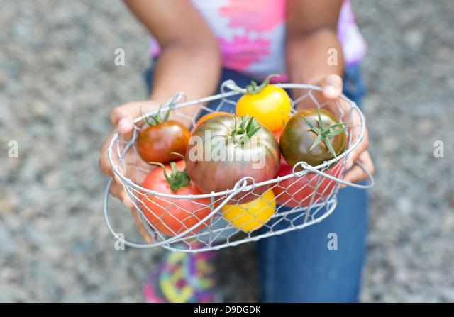Girl holding basket of ripe tomatoes, cropped image - Stock-Bilder