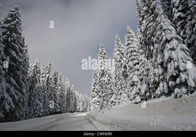 Winter scenery with road in snow. Rodopi Mountains, Bulgaria - Stock Image