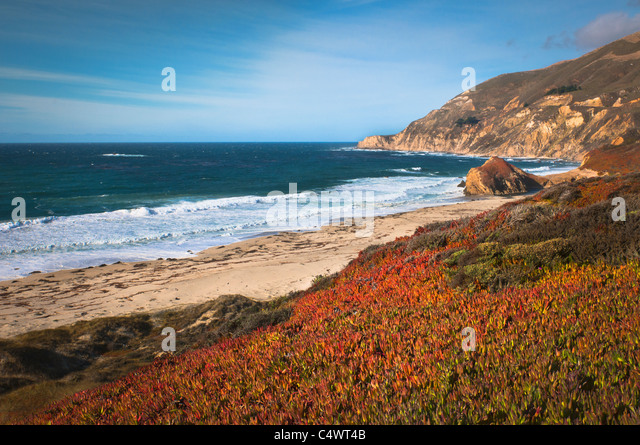 USA,California,Big Sur,Red plants by beach - Stock Image