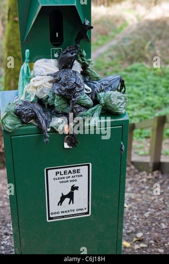 Overflowing Dog waste bin on footpath - Stock Image