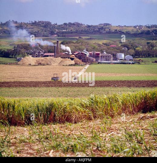 Sugar Production West Indies Stock Photos & Sugar ...