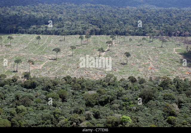 Aerial view Amazon rain forest clearance for agriculture Isolated Brazil nut trees sentenced to death Fallen trees - Stock Image