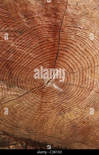 Felled tree at Westonbirt Arboretum, Gloucestershire - Stock-Bilder