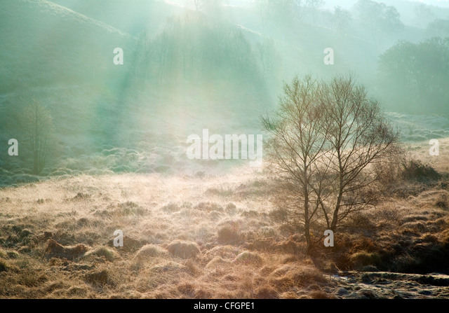 Mist Fog frost in mid-winter, Sherbrook Valley, Cannock Chase Country Park AONB  area of outstanding natural beauty - Stock Image