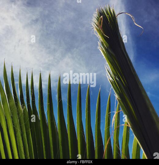 Low Angle View Of Plants Against Sky - Stock-Bilder