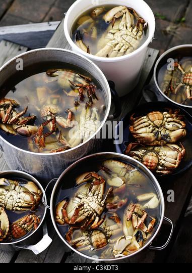 Crabs in saucepan - Stock Image