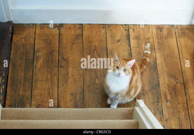 Cat sitting at bottom of stairs - Stock Image