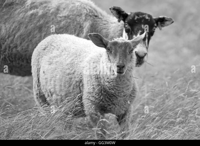 young v lamb ors View the full trunk restaurant menu and see why people love us meals that everyone will love make a booking today and find out for yourself.