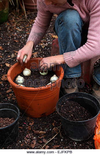 Hyacinth carnegie stock photos hyacinth carnegie stock images alamy - Planting hyacinths pots ...