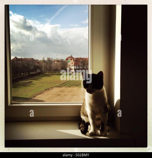 A cat is seen on a window sill. - Stock Image