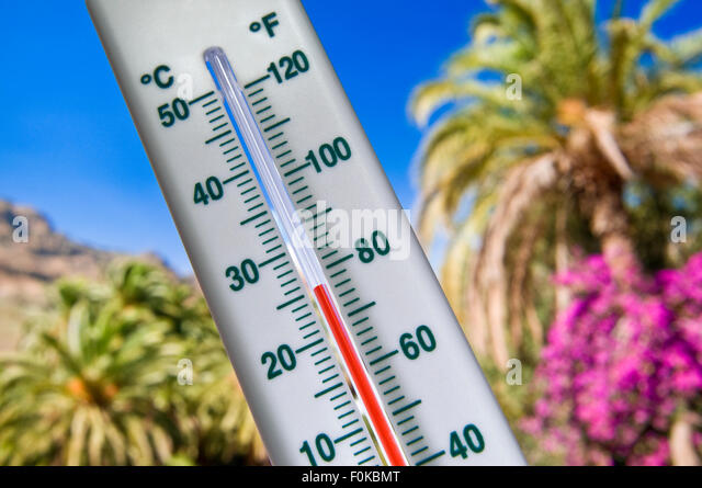 Thermometer displays a warm holiday temperature of 25 degrees Centigrade against palm trees mountain and blue sky - Stock Image