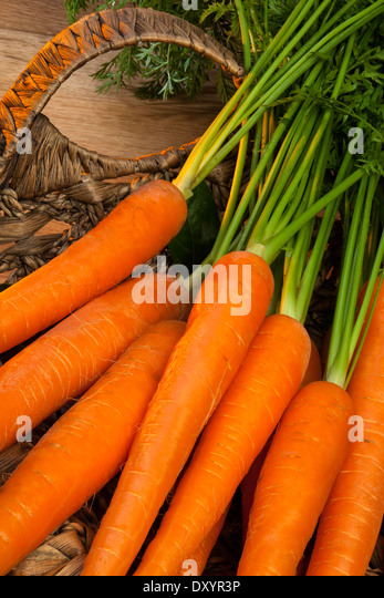 A basket of freshly picked organic carrots - Stock Image
