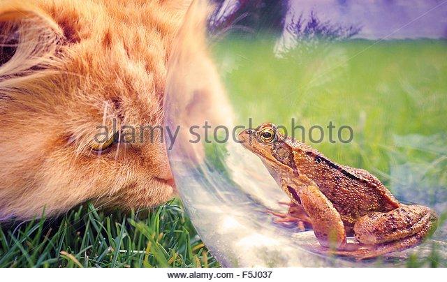 Highlander and frog - Stock-Bilder
