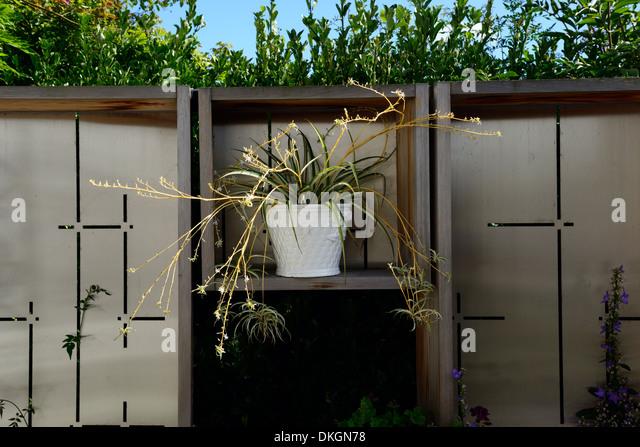 The Dillon Garden Dublin Ireland potted plant contrasting flower colour garden plant combination - Stock Image