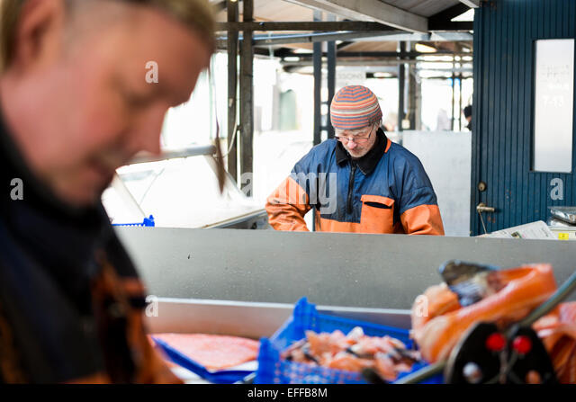 Mature male workers working in fishing industry - Stock Image