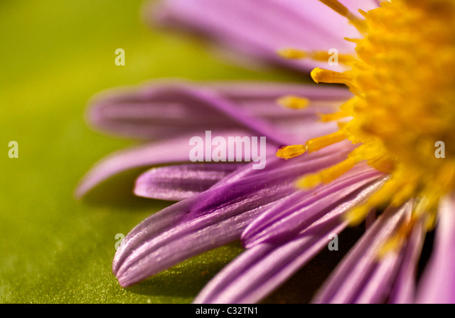 macro photo of a flower - Stock Image