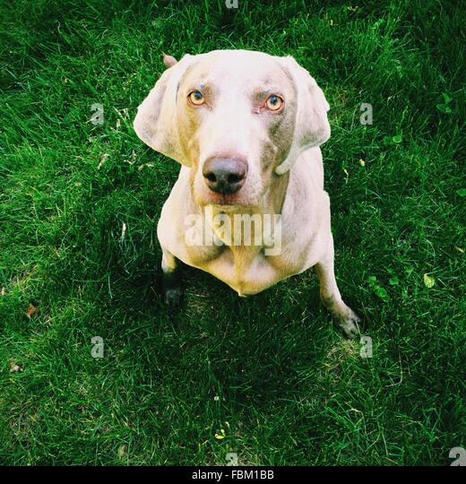 Close-Up High Angle Portrait Of A Dog - Stock Image