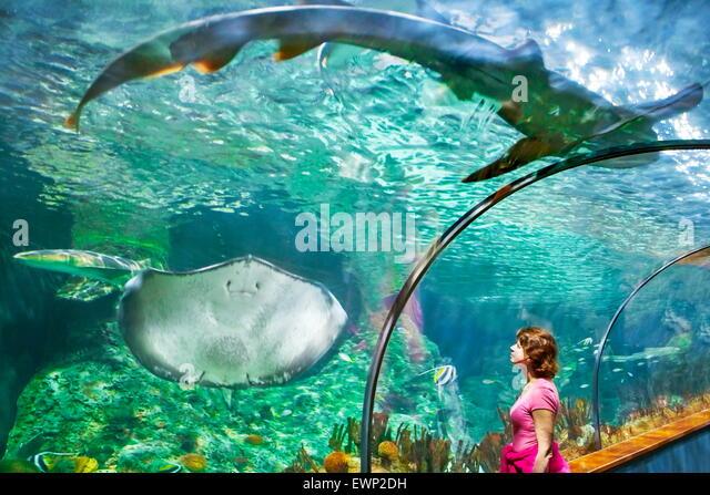 The Shark and Stingray, aquarium in Loro Parque, Puerto de la Cruz, Tenerife, Canary Islands, Spain - Stock Image