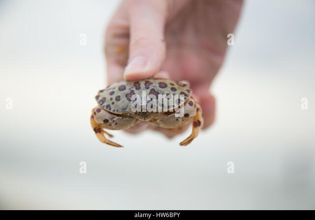 Hand holding crab - Stock Image