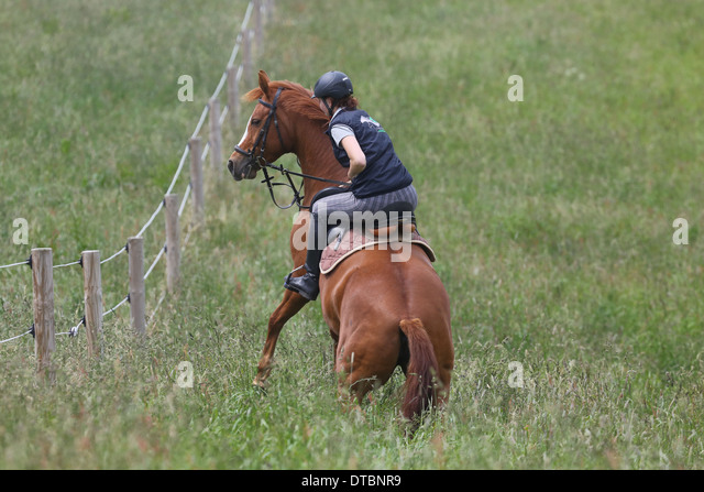 Horse shy on horseback - Stock Image