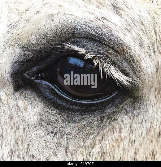 Horse Eye - Stock Image