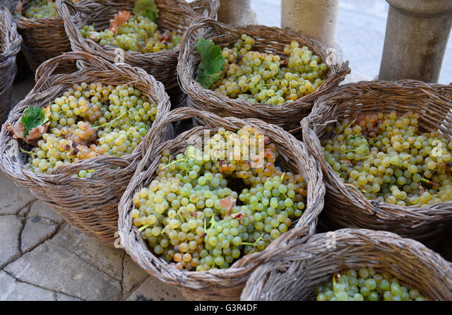 Grapes Sherry Jerez, Andalucia Spain Wicker baskets, grape harvest wines - Stock Image
