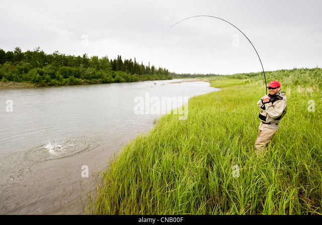 Fly fisherman fights a sockeye salmon on the Mulchatna River in the Bristol Bay area, Southwest Alaska, Summer - Stock Image