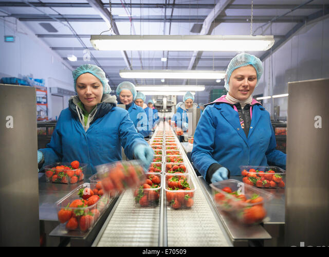 Female workers packing fresh strawberries into trays on fruit farm - Stock Image