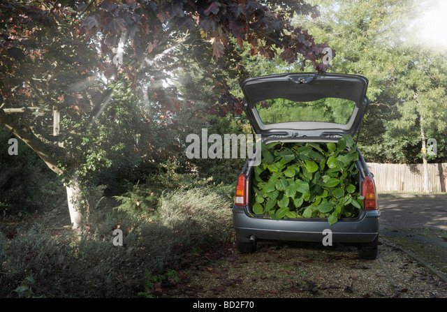 Car filled with green vegetation - Stock Image