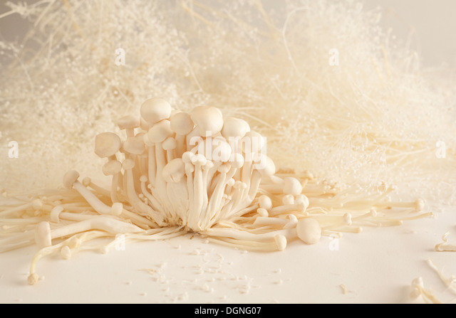 White beech mushrooms still life - Stock Image