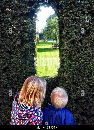Peeking through the hedge - Stock-Bilder