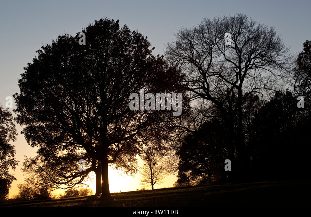 A bright winter sky outlines wintery trees on a hillside on London's famous park, Hampstead Heath. - Stock Image