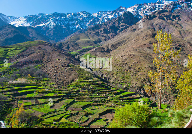 Terraced vegetable fields and farm land belonging to Berber farmers in the High Atlas Mountains, Morocco, North - Stock Image