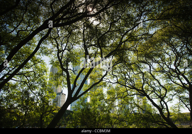 Trees in nature preserve, Buenos Aires, Argentina - Stock Image