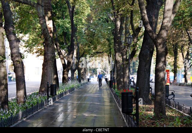 Tree Lined Pedestrian Walkway Stock Photos & Tree Lined ...