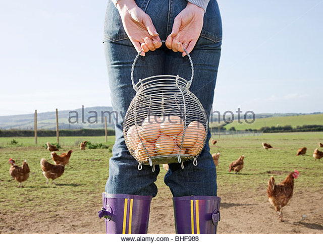 Farmer holding basket of eggs near chickens - Stock-Bilder