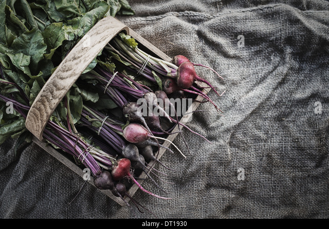 Woodstock New York USA Organic Assorted Beets with stems just harvested - Stock Image