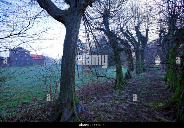 Monks' Trail at Gut Scheda, Germany, North Rhine-Westphalia, Wickede - Stock Image