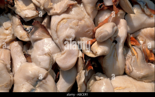 Bahamas bahamaian islands fresh conch meat for sale in fish market - Stock Image