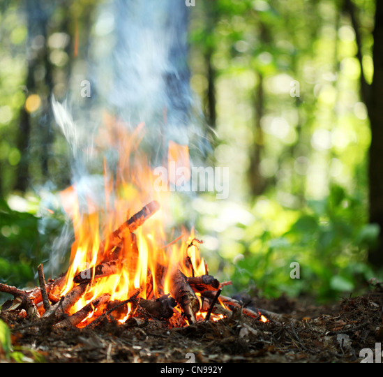 Bonfire in the forest. - Stock Image