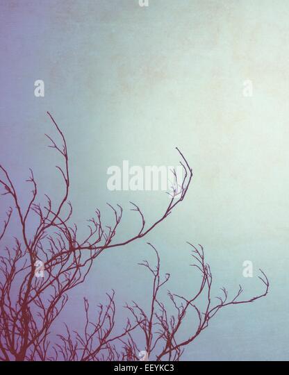 Bare tree branches against a winter sky - Stock-Bilder