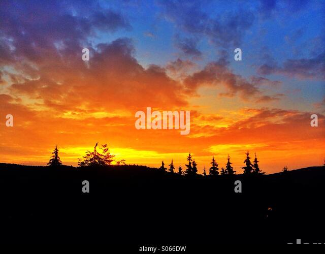 Sunset trees silhouette - Stock Image