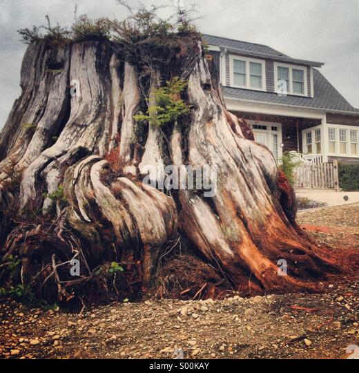 Old growth tree stump next to a newly built home - Stock-Bilder